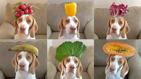 dogs and oranges 100 fruits vegetables on s in 100 seconds maymo