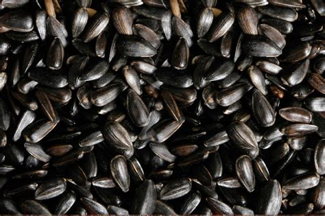 black sunflower seeds for humans buy black sunflower seeds from agricom impex india id 1808030