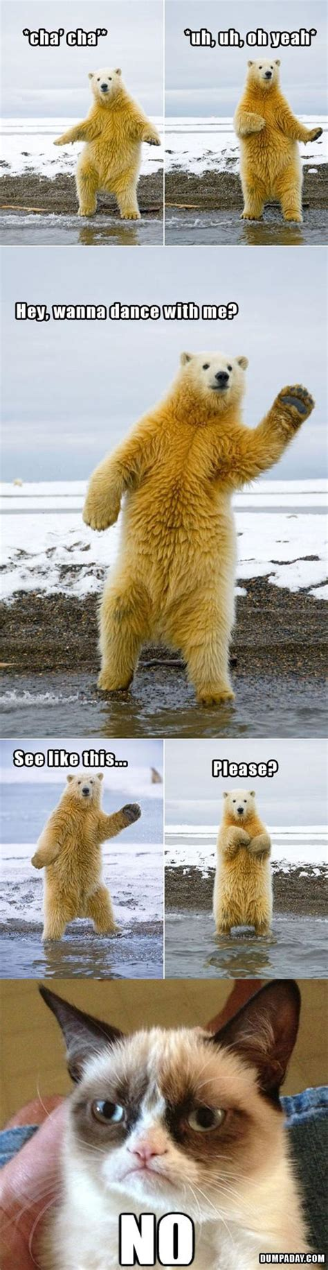 Dancing Polar Bear Meme - grumpy cat dancing with polar bear funny pictures dump
