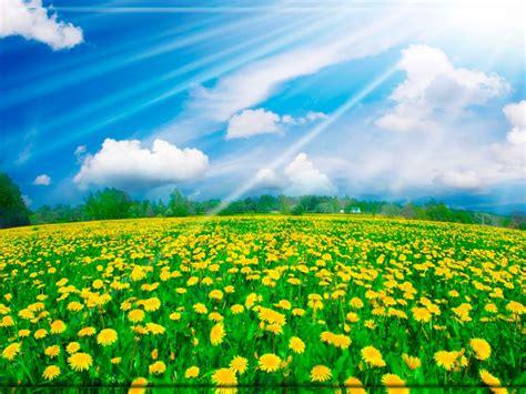fondos de escritorio bonitos fondo pantalla bonito paisaje flores fondo de escritorio