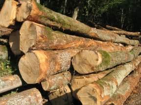 en bois file billes de bois sur le bord d une route 003 jpg