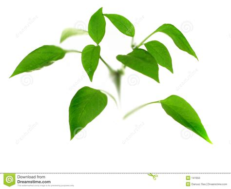 small plant small plant stock photo image 141650