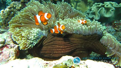 fish pictures coral reef fish are more resilient than we thought study