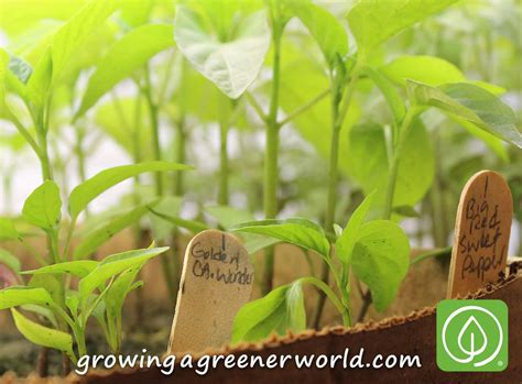 Starting A Garden From Seeds by Episode 315 All About Seeds Growing A Greener World 174