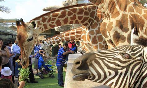 emirates park zoo emirates park zoo resort in abu dhabi groupon