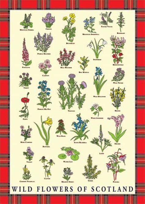 Charming List For Christmas Gifts #3: Wild-flowers-of-scotland-tea-towel-2528-p.jpg