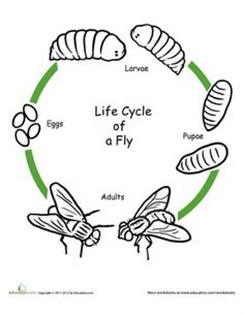 life cycle of a silkworm coloring page from moth category