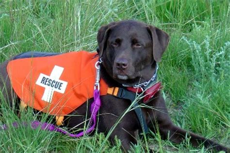 puppy finder rescue adopting a rescue trainer boston