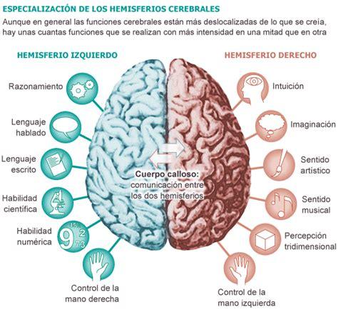 el cerebro obeso las biolog 237 a a color el cerebro y las emociones