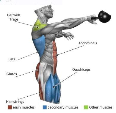 kettlebell swing muscles kettlebell swings effect the above groups anatomy