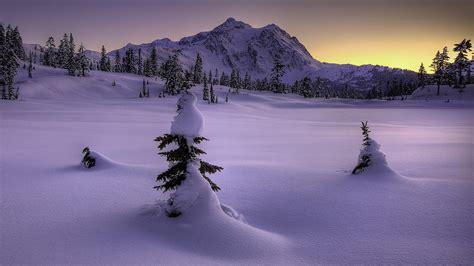 panorama fiori telefono serata di inverno in montagna guarda wallpaper gratis