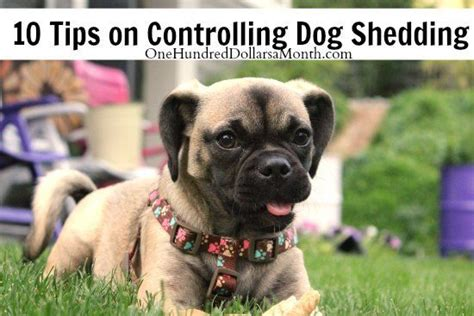1000 ideas about shedding on