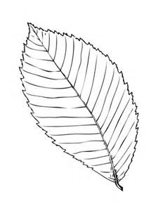 Elm Leaf Coloring Page | 301 moved permanently