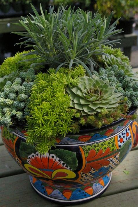 succulent container gardens photos ideas 25 best ideas about talavera pottery on