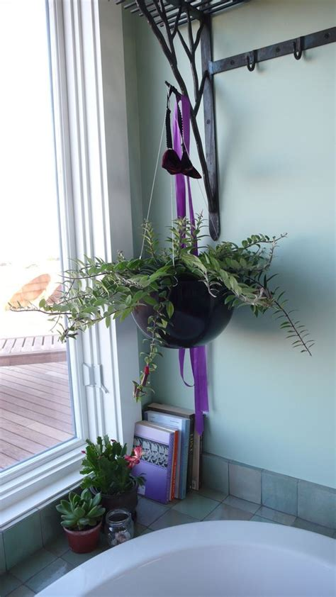 bathroom hanging plants best plants that suit your bathroom fresh decor ideas