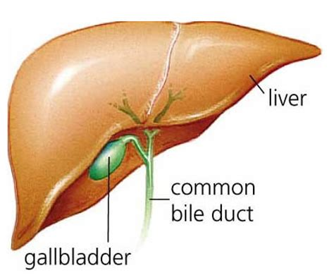 gallbladder surgery recovery convalescence and recovery after gallbladder surgery