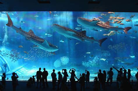 japanese aquarium an aquarium shroud of the avatar forum