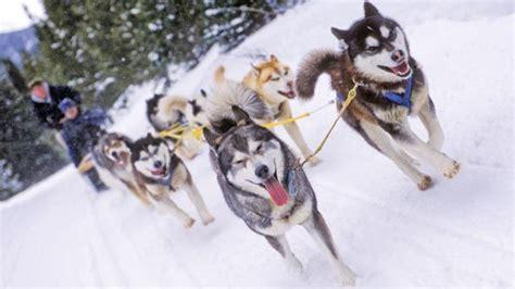 sledding breckenridge o que fazer neve esportes de neve turismo de neve
