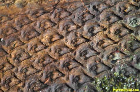 Find In Arkansas My Fossil Find Part 16