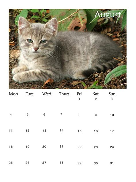 Cat Calendar 2014 Best Cat And Calendars