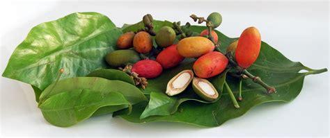 melinjo aziatische ingredientennl