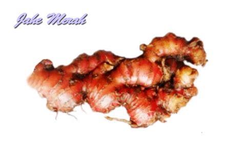 Minyak Atsiri Jahe Merah khasiat dan manfaat jahe merah untuk kesehatan