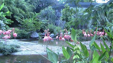 Riverbanks Zoo And Botanical Garden Flamingos Picture Of Riverbanks Zoo And Botanical Garden Columbia Tripadvisor