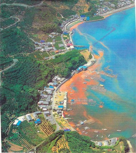 imagenes de mareas rojas actualidad 161 protejamos el medio ambiente