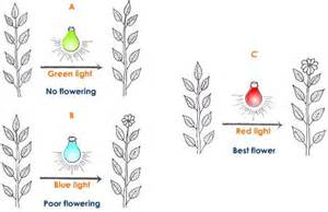 does the color of light affect plant growth led flowering lights led wiring diagram and circuit