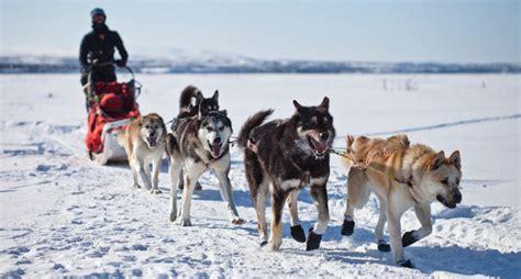 mush sled mushing denali national park preserve u s national park service