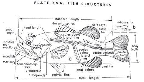 diagram of fish images