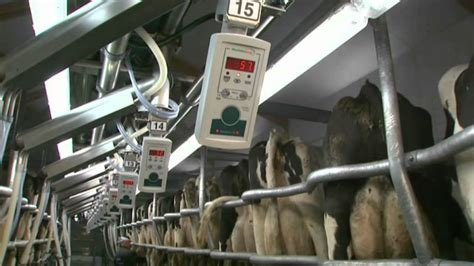swing melkstand swingover melkstand dt70 gea farm technologies