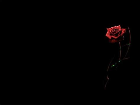wallpaper abstrak gothic red rose black background wallpaper google search