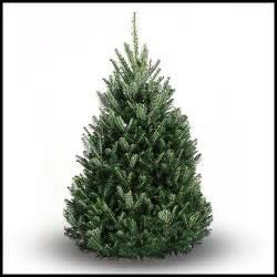 balsam fir christmas tree real christmas tree