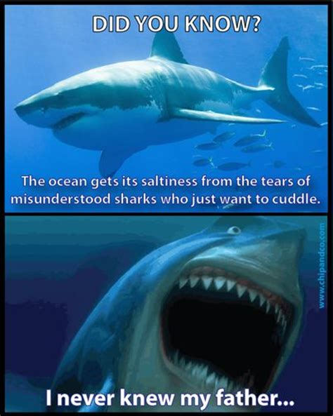 Sad Shark Meme - finding nemo shark quotes quotesgram