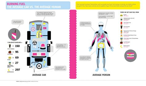 libro infographics human body burning fuel the average car vs the average human infographic daily infographic