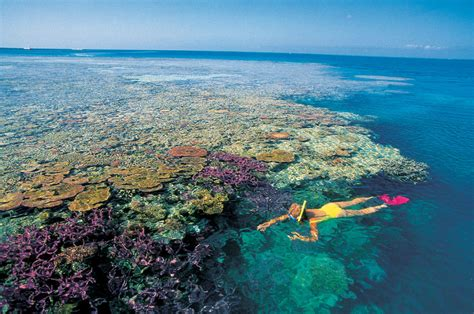 the the great barrier reef of australia its products and potentialities containing an account with copious coloured and photographic illustrations and coral reefs pearl and pearl shell bãªch books my greatest world destination great barrier reef australia