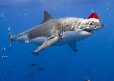 images of sharks shark savers home