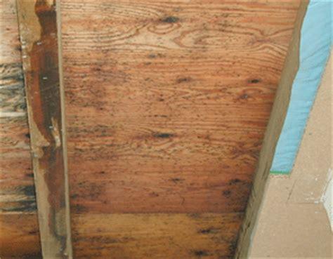 Wie Entfernt Schimmel Holz 4895 by Schimmelpilze Mehr F 252 R Den Menschen Als F 252 R Das Holz