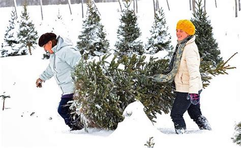 christmas tree farms upstate ny where to cut your own tree in upstate ny interactive map newyorkupstate