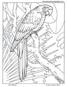 Cool Animal Coloring Pages macaw coloring pages birds coloring rainforest animals