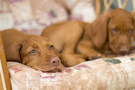 how much should an 8 week puppy sleep should you let your sleep with you daily two cents