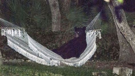 What Is A Hammock In Florida hammock on memes