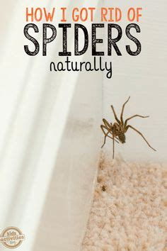 How To Keep Spiders Away From Your Bed by Mosquito Bites Vs Bed Bug Bites How To Tell The