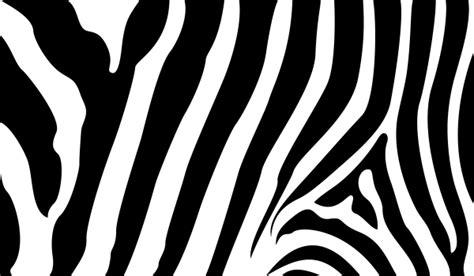 zebra pattern eps zebra stripe free clipart