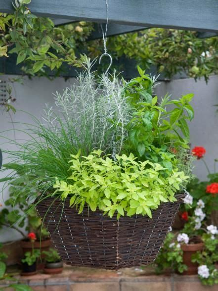 herb container garden combinations fragrant herb container combinations gardens window