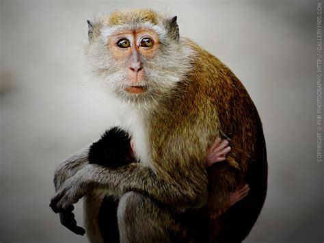 monkey and monkey wallpapers images and animals monkey pictures 707