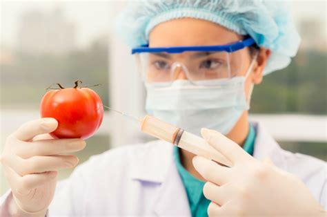 definicion de alimentos transgenicos alimentos transg 233 nicos desventajas y problemas lifeder