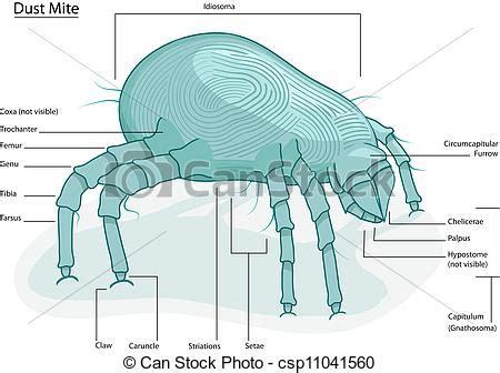 Draw House Layout clip art vektor von staub haus milbe deutlich
