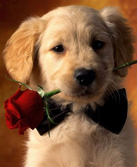 dogs wallpapers full hd 1080p best hd dogs wallpapers gg yan 388 best images about animal wallpapers pictures pc full